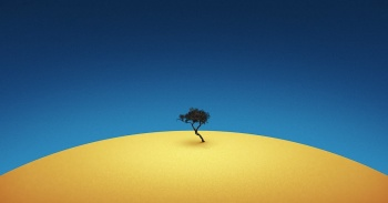 single_tree_in_the_desert_abstract-1600x1200